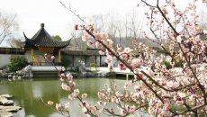 十里梅花香雪海--3月8日杭州超山汉服外拍活动