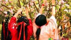 """新乡近百大学生聚公园身着汉服过""""花朝节"""""""