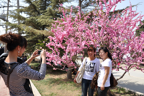 4月20日兰州桃花节开幕 将举办汉服礼仪展示等多项文化活动-图片1