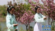 """河南大学生着汉服种樱花 舞""""礼仪之邦"""""""