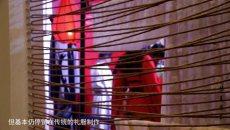 [视频]汉服纪录片《华夏有衣》