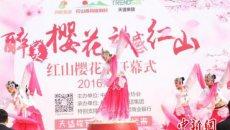首届中国红山樱花文化节开幕 着汉服美女邂逅樱花飘逸非凡