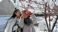 西安市民植物园穿汉服弹古琴踏雪寻梅