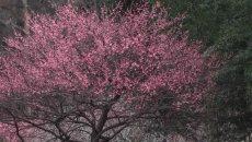 【汉服美景】南枝有花