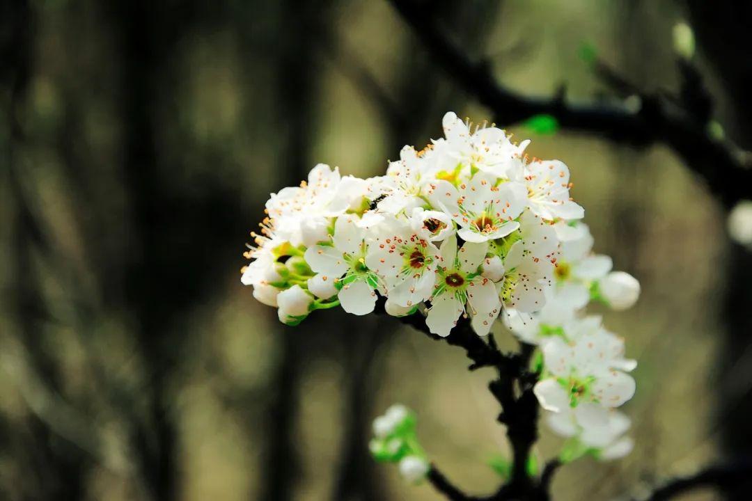 惊蛰:12首惊蛰诗词,一声惊雷,万物春回