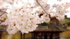 """别只光顾着过清明节,花朝也是古代的""""踏青节""""之一"""
